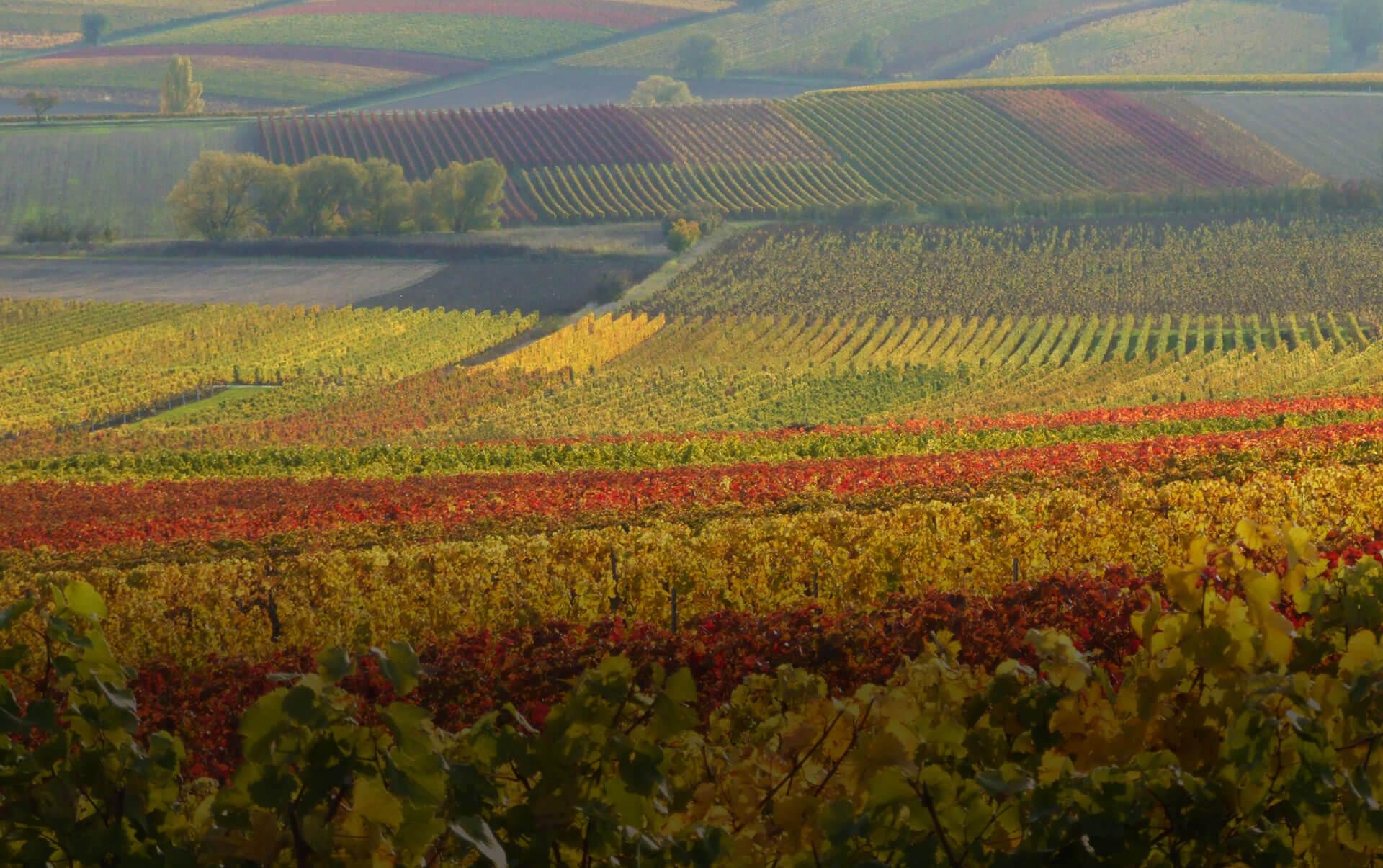 Weingut in Frankreich